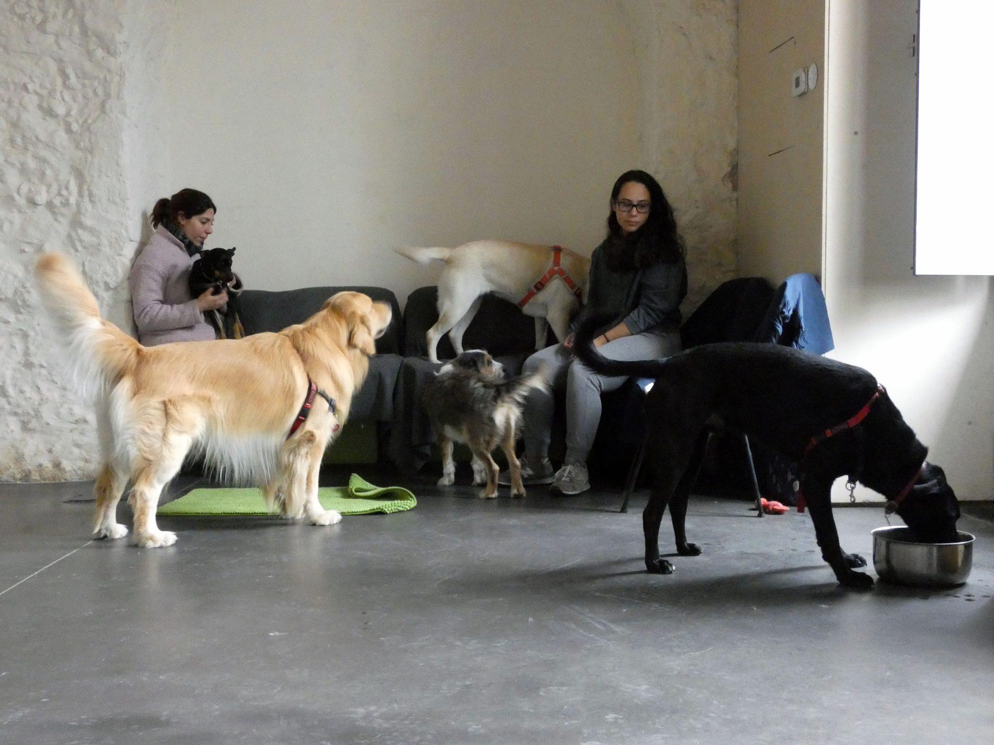 Instituto do Animal Sílvia Machado Marvila